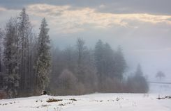 Forest in hoarfrost at foggy sunrise. Lovely nature scenery in winter Stock Photos