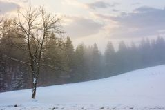 Forest in hoarfrost at foggy sunrise. Lovely nature scenery in winter Royalty Free Stock Image