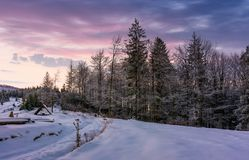 Forest in hoarfrost on snowy hillside at dawn. Gorgeous nature scenery in winter with magenta sky Royalty Free Stock Photo