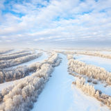 Forest in hoarfrost, top view Royalty Free Stock Photo
