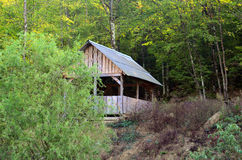 Forest. Home in the woods tree grass greenery arbor Stock Photography