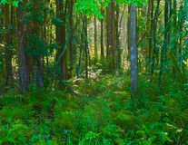 Forest horizontal HDR 1. Horizontal HDR image of a forest in Florida Stock Images