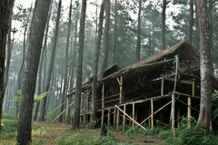Forest house. This is a house made out of tree and this was located in Indonesia Stock Image