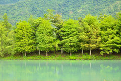 Forest at Hualien Royalty Free Stock Photo