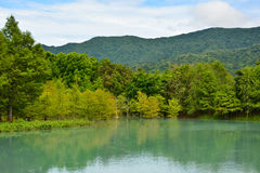 Forest at Hualien Royalty Free Stock Images