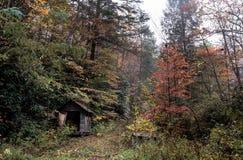Forest Hut Shelter Stock Image