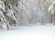 Forest with icy pond stock photos