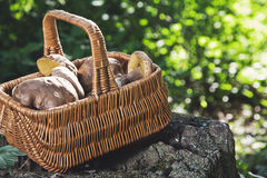 Forest idyll. Basket with mushrooms on a beautiful tree stump. Royalty Free Stock Images