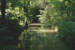 Forest, Idyllic, Leaves Royalty Free Stock Photo