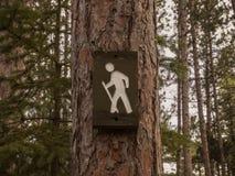 Forest, Idyllic, Nature Royalty Free Stock Photos
