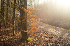 Forest. A forest illuminated by the sun Stock Photography