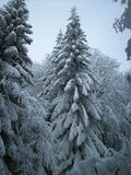 Forest. Illuminated forest in Winter Coat Royalty Free Stock Photo