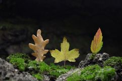 Forest Illusion abstract  composition of autumn leaves. Royalty Free Stock Image