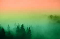 Forest immersed in fog Stock Photography