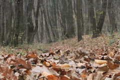 Free Forest In Autumn Stock Images - 16867034