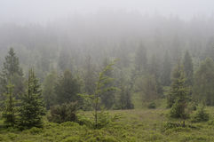 Forest In Fog - Mountain In Poland Stock Images
