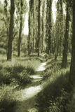 Forest In Monochrome Royalty Free Stock Images
