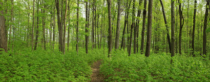 Forest In Spring Time Stock Images