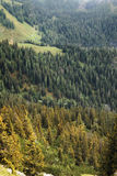 Forest In The Bavarian Alps Royalty Free Stock Photography
