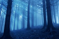 Forest In The Evening Royalty Free Stock Photography