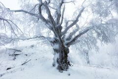 Free Forest In Winter With Frozen Trees Royalty Free Stock Photos - 172068598