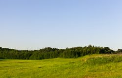 Forest and individual trees. Growing on hilly green territory, summer landscape stock photos
