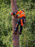 Forest industry. In the north of Sweden Royalty Free Stock Photos
