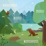 Forest infographic in low polygon style. Vector illustration of forest animals. Boar, woodpecker, fox, rabbit and elk vector illustration for web, mobile and Stock Photo