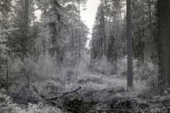 Forest in infrared Stock Photography