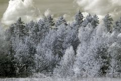 Forest in infrared Royalty Free Stock Photography