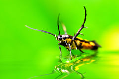 Forest Insects Stock Images