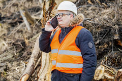 Forest inspector talking on smartphone near to pile sawed bushes and strains Stock Images