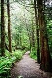 Forest Invitation anziano immagini stock libere da diritti