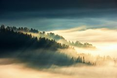 Forest on the hill in fog. view from the top. Forest island on the hill in the sea of fog. view from the top. gorgeous scenery at sunrise. wonderful nature stock photo