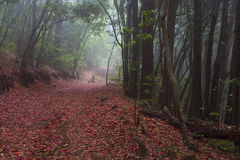 Forest on the island of Tenerife, nature and hiking Royalty Free Stock Images