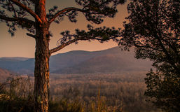 Forest in Istria Royalty Free Stock Photos