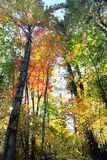 The Forest in its Fall Colors with sunburst Stock Photos