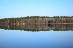 Forest and its reflection in river in spring day Royalty Free Stock Photography