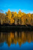 Forest and its reflection. Forest, touched by the golden autumn, reflected in the water Royalty Free Stock Photography