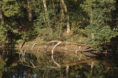 Forest with reflection in water. A forest with its reflection in the water. This photograph was made on a sunny day in autumn Stock Photography