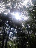 Forest. At Jahorina bosnia and Hercegovina Stock Image
