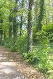 Forest, Jardines de la Granja de San Ildefonso, monuments in Spa Stock Images
