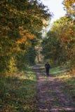 Forest Jogging foto de archivo libre de regalías