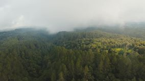 Rainforest in cloud, Bali,Indonesia. Forest, jungle in the mountains of tropical island in the clouds. Aerial view of over tropical rainforest in mountains with stock video footage