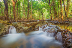 Forest. Jungle tropic rain forest photography Stock Photos
