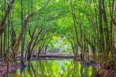 Forest. Jungle tropic rain forest photography Royalty Free Stock Images