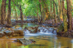 Forest. Jungle tropic rain forest photography Royalty Free Stock Photography