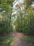 Forest. Käfertalerwald (Kaefertal forest), Mannheim, Deutschland (Germany), 31 October 2014 royalty free stock photos