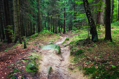 Forest of Karkonosze National Park in Poland Royalty Free Stock Image