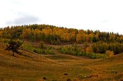 Forest in Khakassian stepp stock images